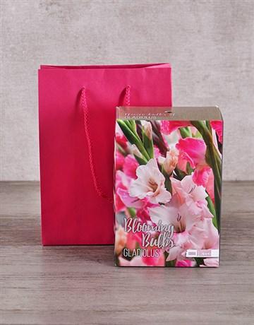 Gladiolus Bulbs in Cerise Bag!
