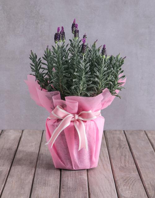 secretarys-day: Pink Lavender Display!