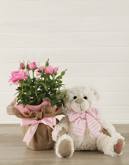 baby: It's a Girl Teddy and Pink Rose Bush!