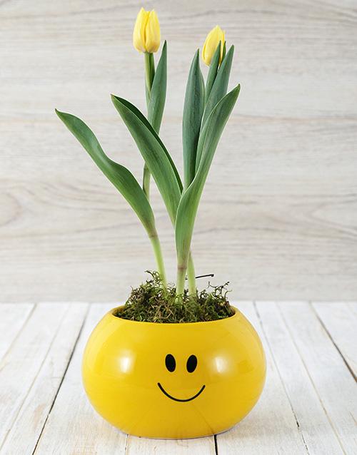 seasonal: Yellow Tulip Plant in Smiley Pot!