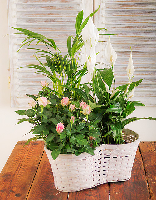 lily: Mix of Flowering and Green Plants in a Basket!