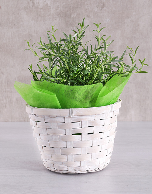 green: Rosemary Plant Basket!