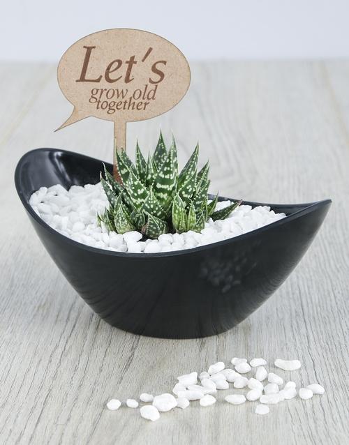 succulents: Lets Grow Old Succulent!