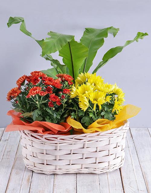 flowering: Mix of Flowering Plants in a Basket!