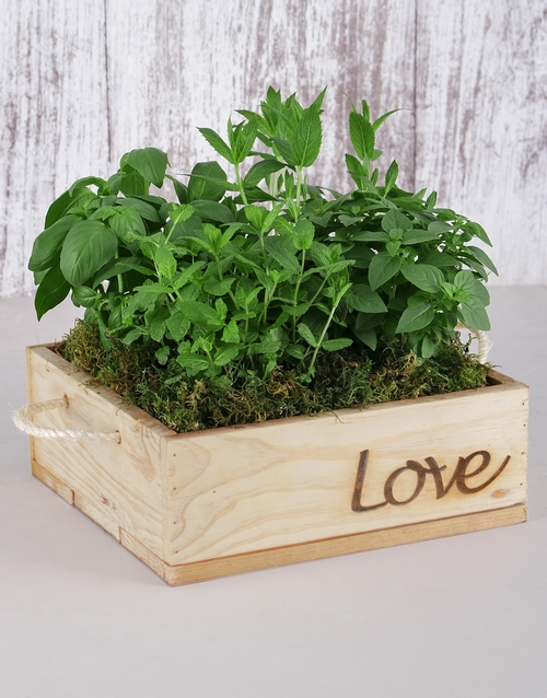 love-and-romance: Herb Garden in Wooden Flower Box!