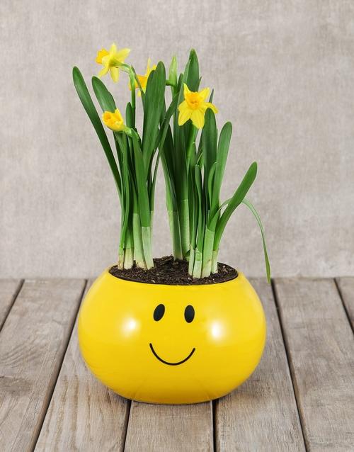 daffodils: Daffodil Plant in Smiley Pot!