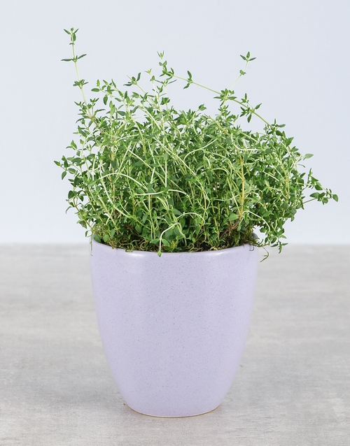 plants: Thyme Herbs in Glazed Pot!