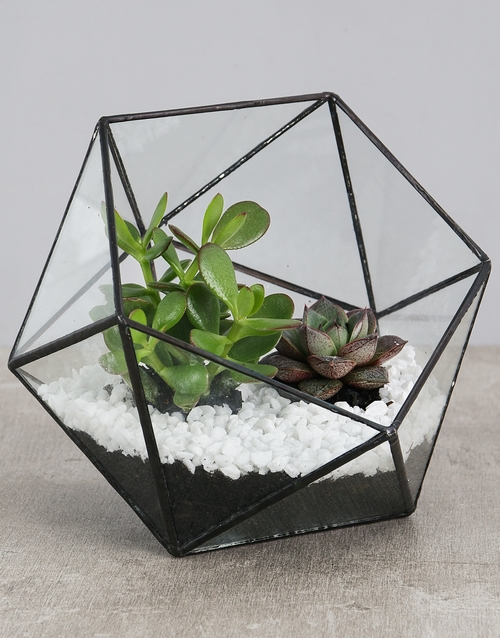 birthday: Succulent With White Stones in a Terrarium!