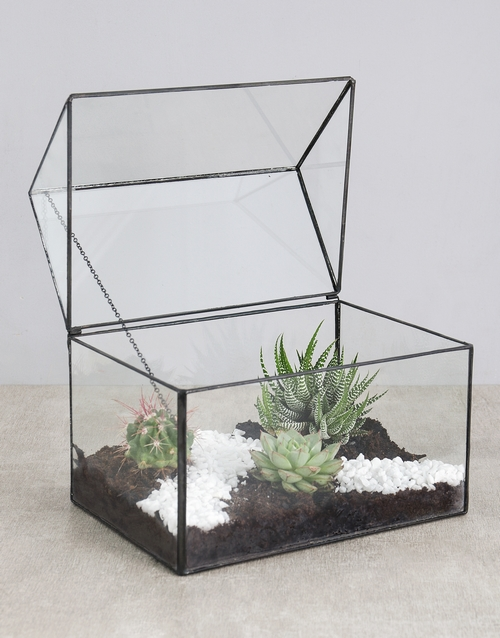 birthday: Cactus and Succulent House!