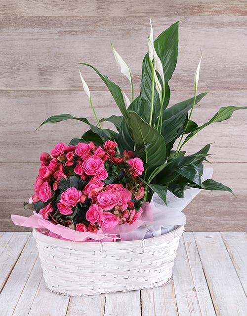 basket: Begonia and Spathiphyllum Basket!