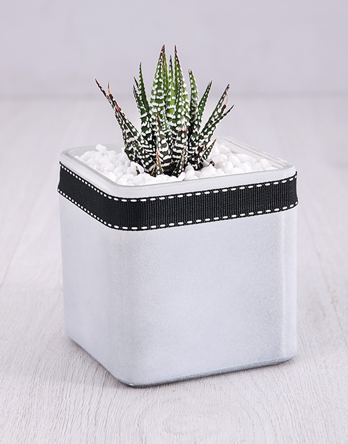 green: White Vase with a Succulent!
