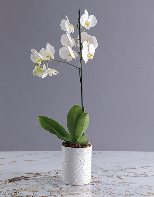 sympathy: Orchids in a Glazed Vase!