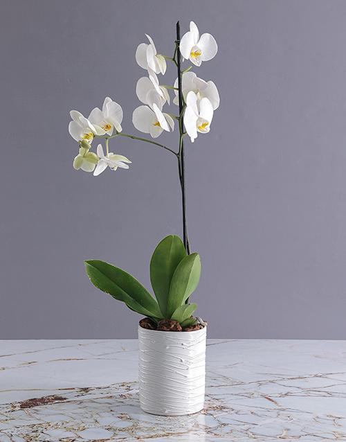 flowering: Orchids in a Glazed Vase!
