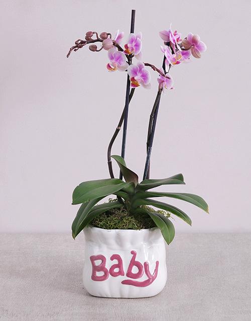 baby: Midi Phalaenopsis Orchid in Pink Baby Vase!