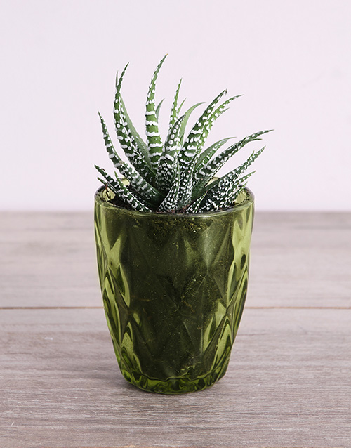 prices: Desert Arrangement in Green Votive!