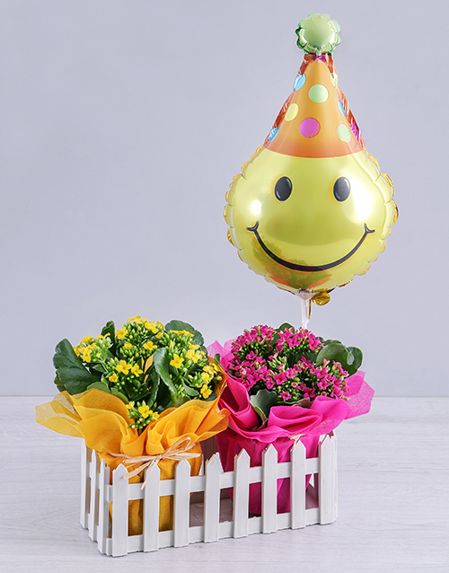 kalanchoe: Kalanchoe Plants and Smiley Balloon in Fence!