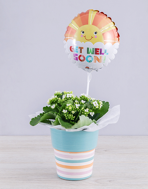 kalanchoe: White Kalanchoe Plant and Get Well Balloon Gift!