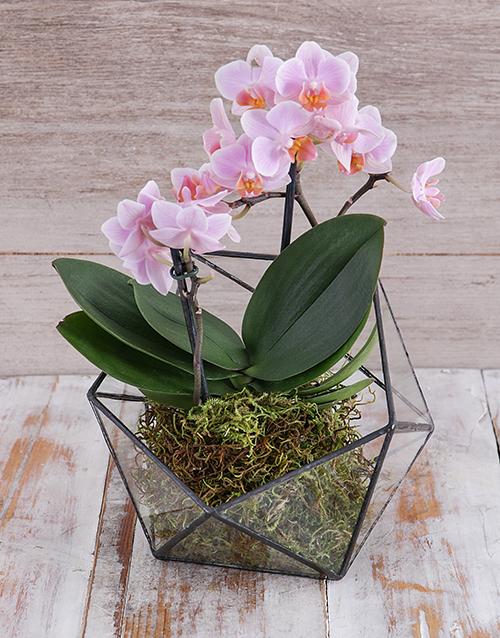 vase: Midi Pink Orchid in Geometric Vase!