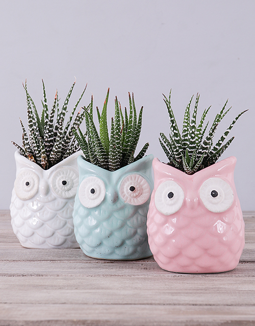 teachers-day: Ceramic Owl with Succulent!