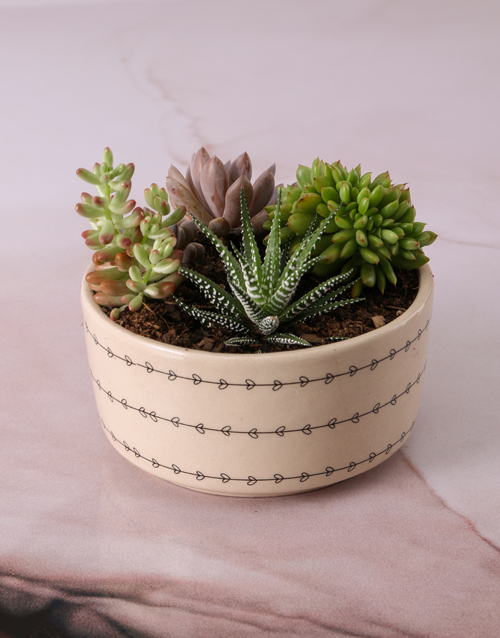 plants: Cacti and Succulents in Love Leaf Bowl!