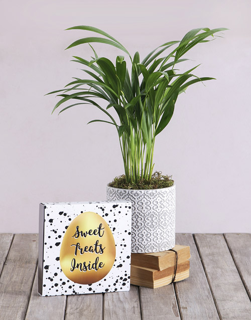 plants: Love Palm with a Box of Chocolates!