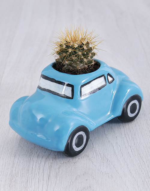 christmas: Succulent in Ceramic Beetle!