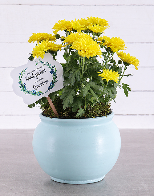 prices: Grandma Chrysanthemum in Blue Pottery!