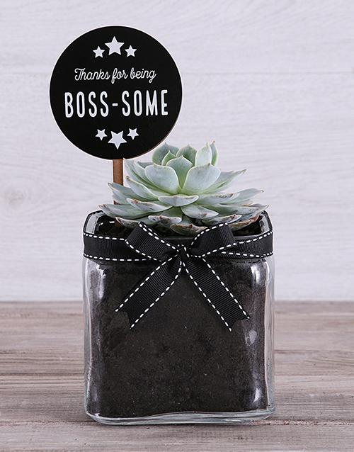 succulents: Boss Some Succulent in Square Vase!