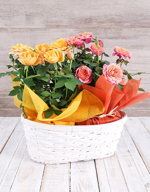 prices: Double Mixed Rose Bush Delight!