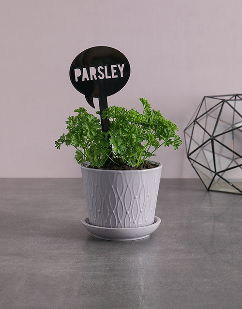 green: Herb Plant in Grey Pot!