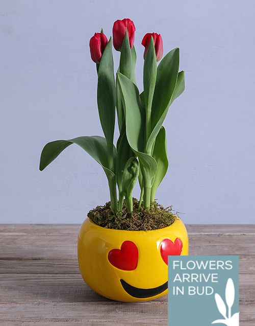 tulips: Tulip Plant in Heart Emoji Pot!