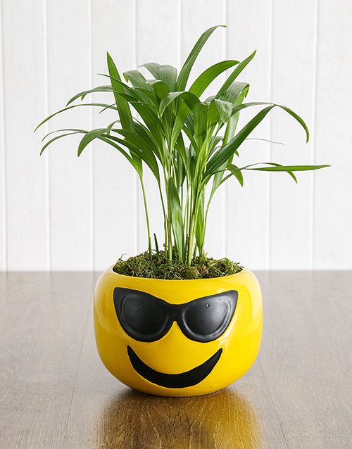 whats-new: Areca Bamboo in Sunglasses Emoji Pot!