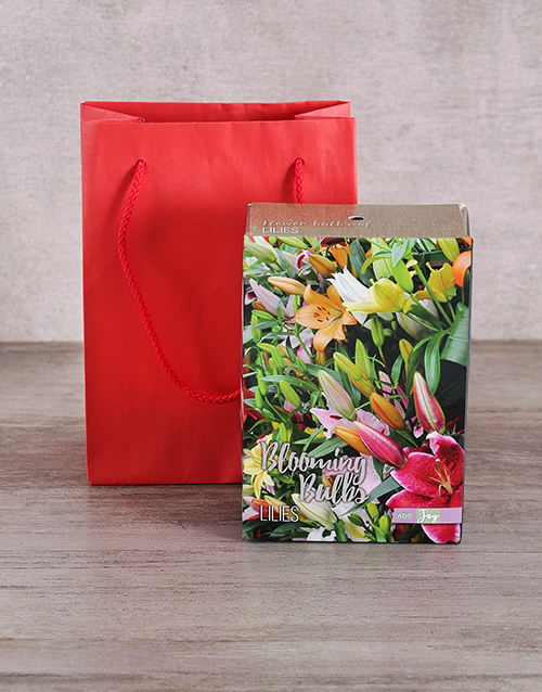 christmas: Lily Bulbs in Red Bag!