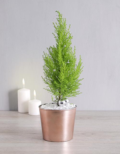christmas: Goldcrest in Copper Pot!