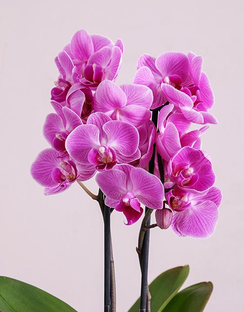 Midi Phalaenopsis Orchid In Silver Square Vase Online