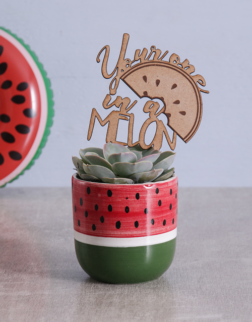 spring-day: Succulent in Watermelon Pot!