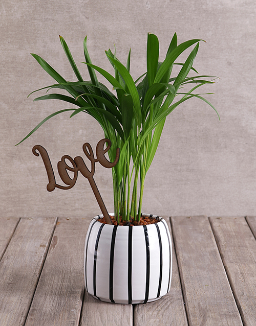 year-end: Love Palm with Wooden Love Cutout!