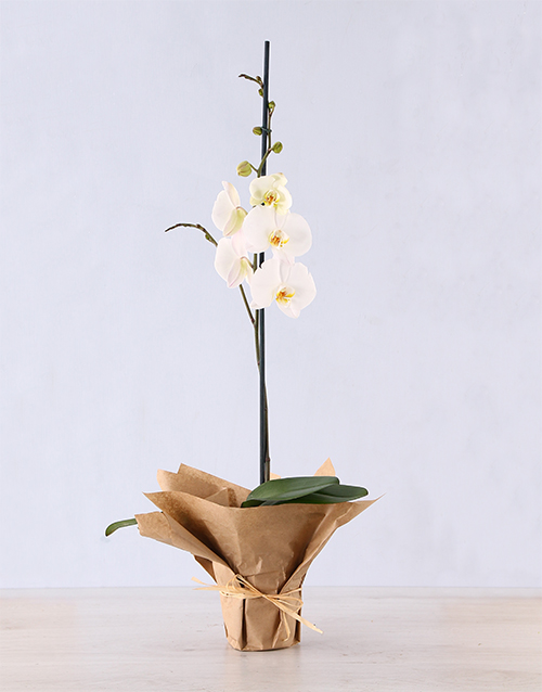 colour: Phalaenopsis Orchid in Craft Paper!