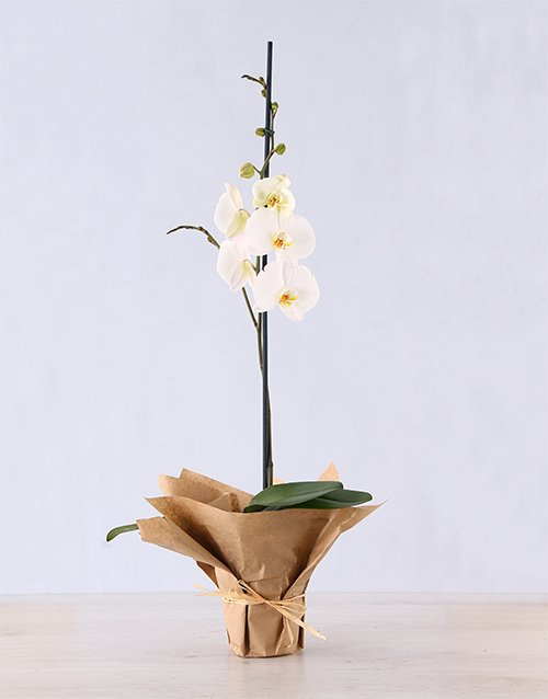 orchids: Phalaenopsis Orchid in Craft Paper!