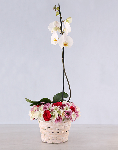 orchids: Pretty in Pink Basket!