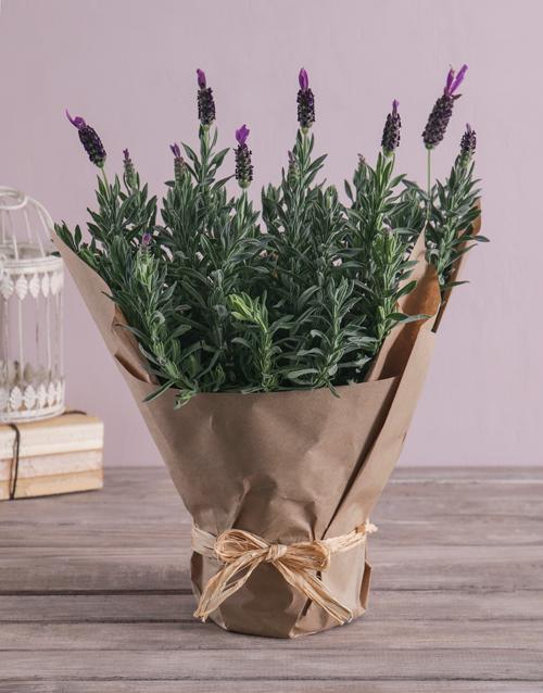 colour: Lush Lavender Plant!