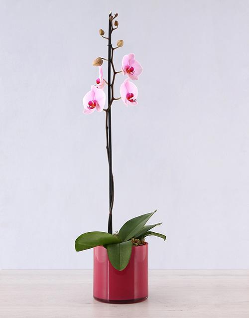 coloured-vases: Orchid in Pink Cylinder Vase!