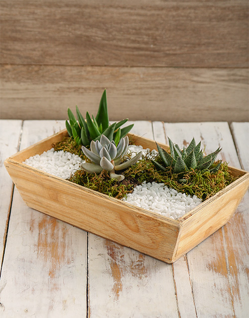 wooden-crates: Spring Succulent Tray!