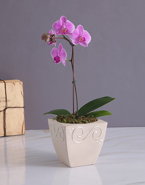 grandparents-day: Exotic Orchid in Pottery Vase!
