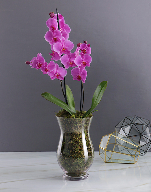 easter: Orchid Glass Vase!