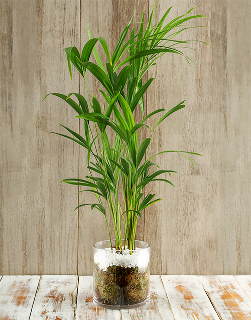 green: Rain Forest Delight Bamboo Plant!