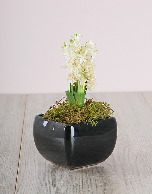 flowers: White Hyacinth in a Black Ceramic Vase!
