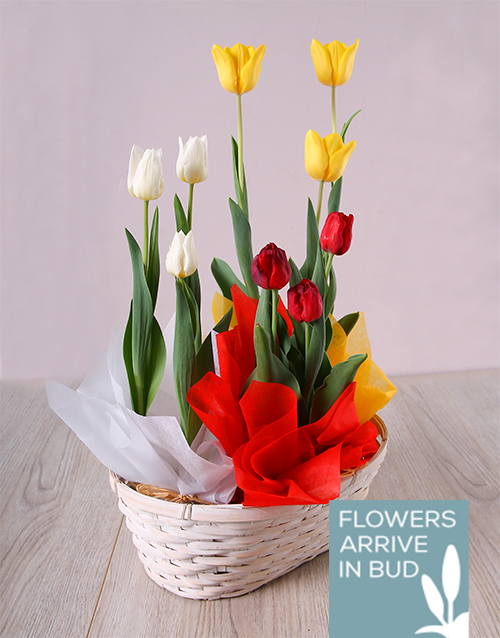 birthday: Trio of Tulips in Basket!