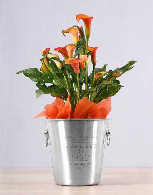 spring-day: Orange Zantedeschia Ice Bucket!