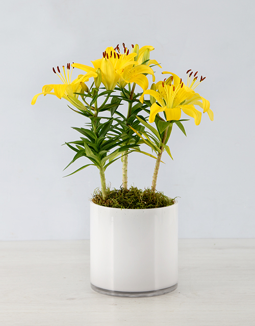 seasonal: Asiatic Lily in Cylinder Vase!